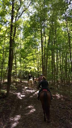 Loudonville, OH: These are photos of our ranch from trail rides,getting engaged to our beautiful horses