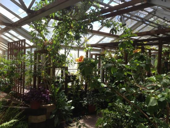 Tropical Room Picture Of Highland Botanical Park And Lamberton Conservatory Rochester