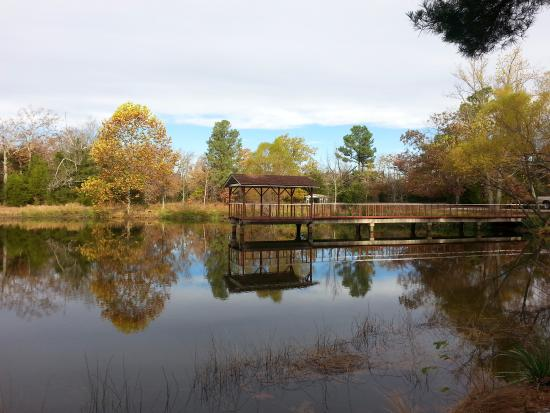 Pond Mountain Lodge and Resort: Taken in November 2015, this is one view of the pond within walking distance from the cabins.
