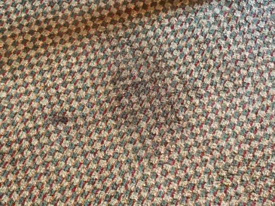 Bradley, IL: carpet in the room 405