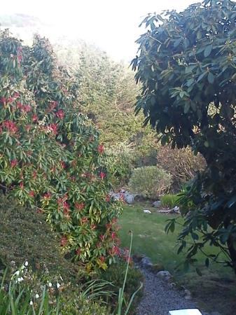 Kilmore, UK: The front garden