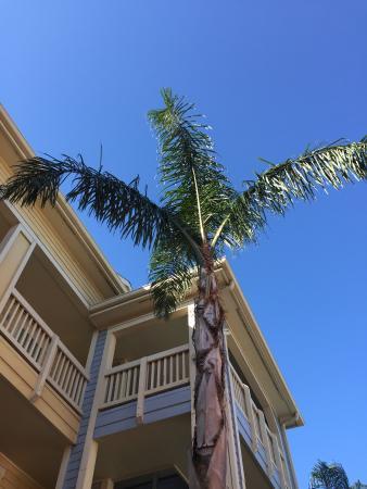 The Dawn Galveston Beach Condominiums Photo