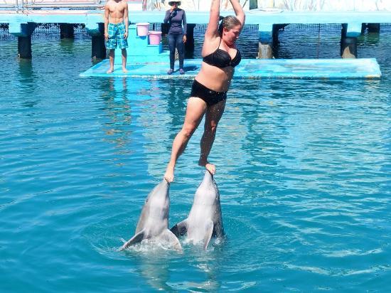 Скачать Игру Дельфин Шоу - фото 7
