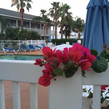 Fulton, TX: Bougainvillea by the pool.