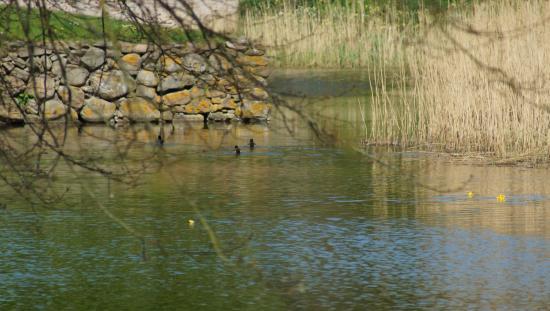Herreborgen Borreby: Voldgrav ved Borreby Herreborg i Skælskør