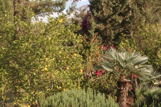 Ourika-Camp Marrakech Photo