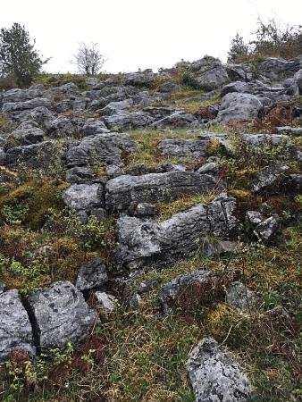 MacCoole Day Tours : The beautiful Burren landscape.
