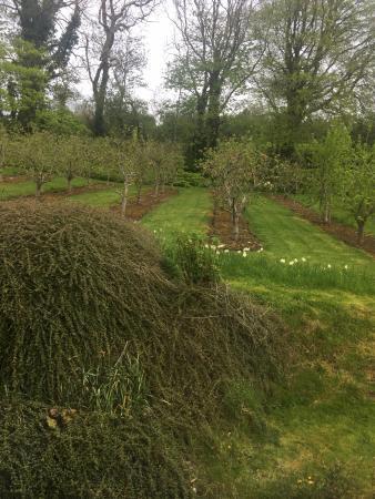 Ballingarry, Irlanda: Apple Orchard