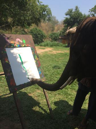 Elephant Life Experience: photo2.jpg