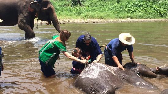 Elephant Life Experience: photo5.jpg