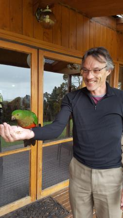 Waratah North, Australia: A King parrot in for a feed.