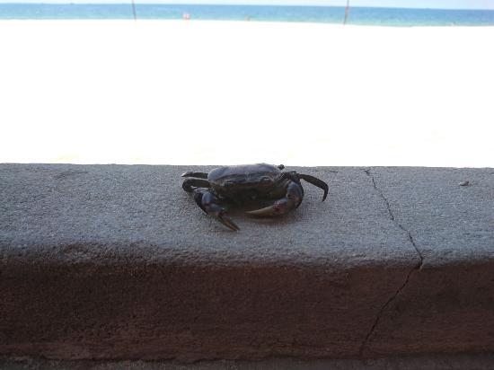 Terracotta Resort: DSC_0279_large.jpg