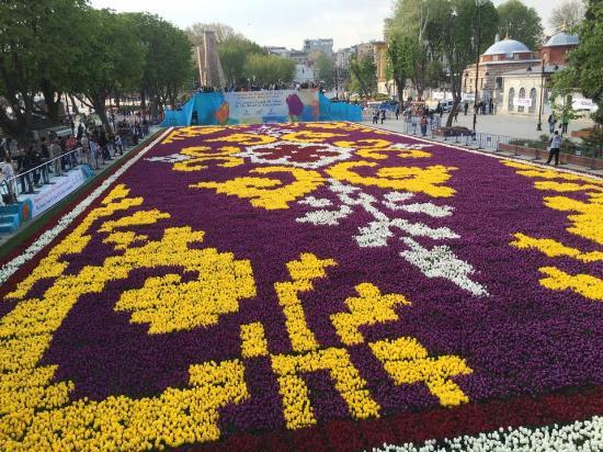 Hasil gambar untuk tulip carpet blue mosque