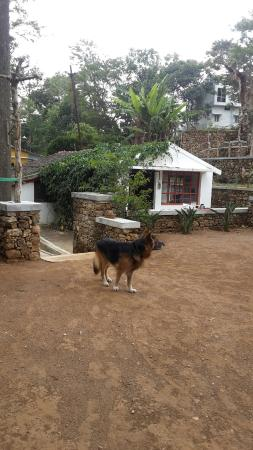 Purfect service ambience for pets on holiday