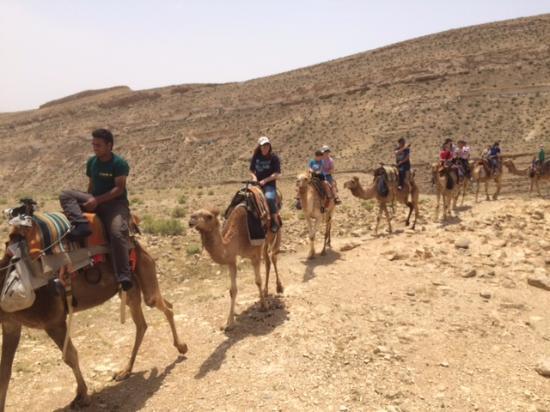 Dimona, Israel: Balade dromadaires dans le Negev