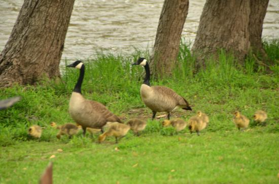 Bourbonnais, IL: Saw this family on Mother's Day