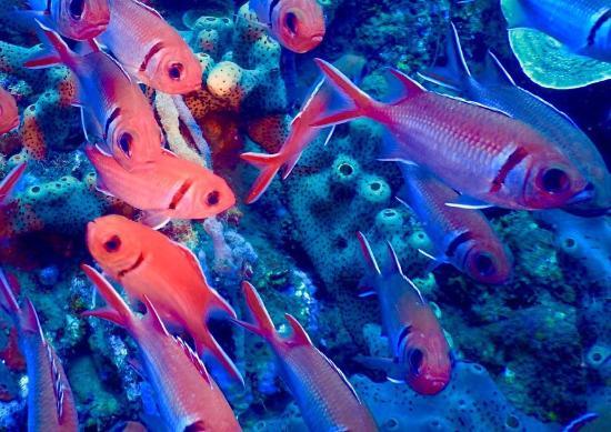 Basse-Terre, Guadeloupe: Infini Plongee
