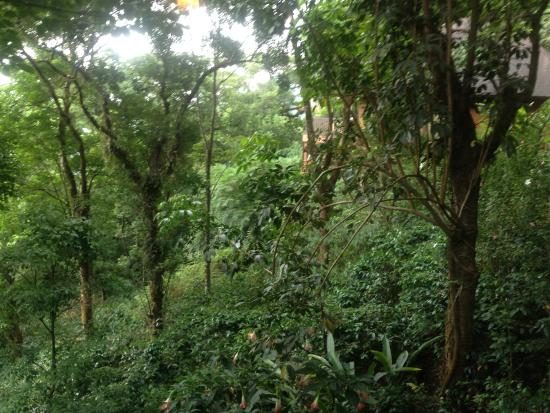 The Tamara Coorg: A view from the cottage window overlooking a wooded valley