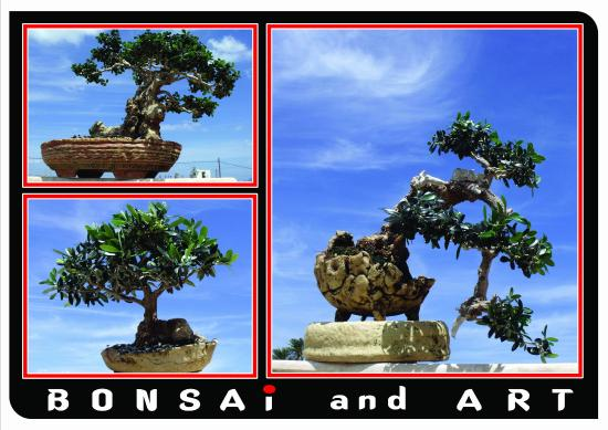 Bonsai and Art