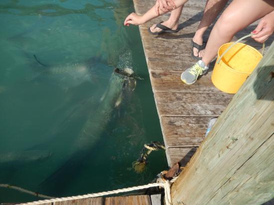 Lake Monroe, Φλόριντα: Wow, perfect timing.