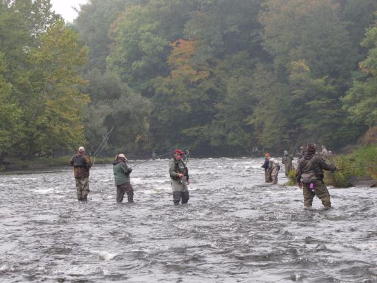 Fall run chinook salmon salmon river pulaski ny for Salmon fishing pulaski ny
