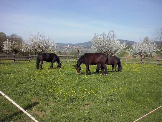 Azienda Agricola Cascina Matine'