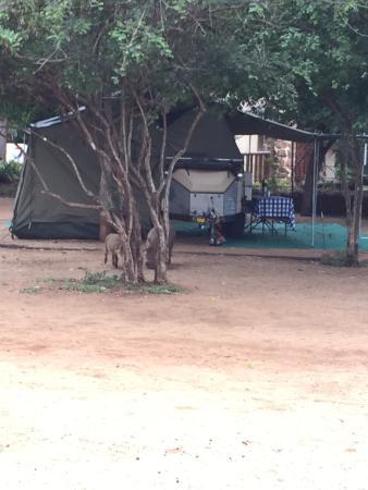 Crocodile Bridge Rest Camp照片