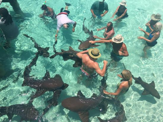 Out Islands: swimming and petting nurse sharks
