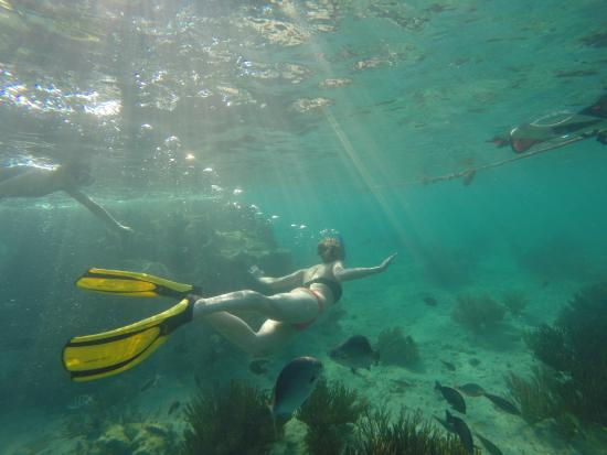 Island Adventures Mexico: Sunrise Snorkeling