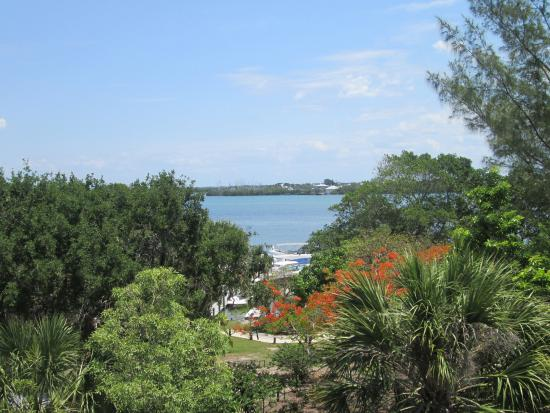 Southwest Gulf Coast, Floryda: View from the Water Tower