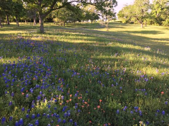 New Ulm, Teksas: photo1.jpg