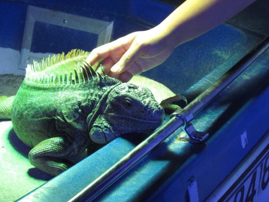 Lol Picture Of Austin Aquarium Austin Tripadvisor
