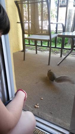 BEST WESTERN PREMIER Saratoga Resort Villas: alimentando a la amiga ardilla