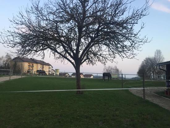 Reiterhof Stoglehner