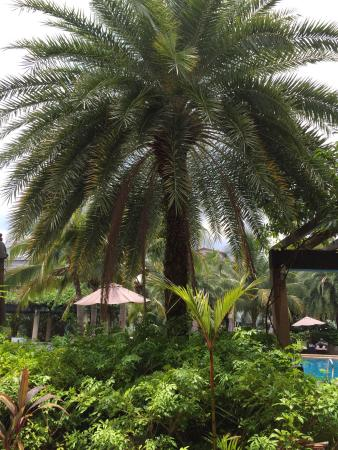 R Mar Resort and Spa: Central location, but not get disturbed about sounds from nightlife.