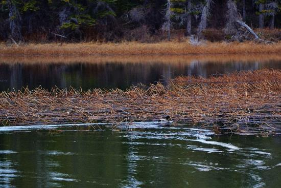 Hinton, Canada: Birds of all shapes and sizes to be seen - birdwatchers delight