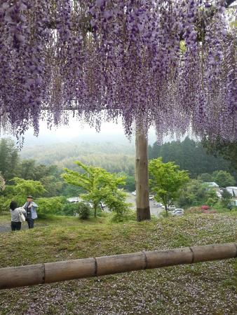 Kitakyushu City Kawachi Fuji Garden Wisterias Blossom - 2018 All You ...