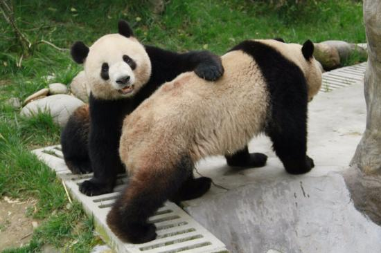 Dujiangyan Panda Base and Center for Disease Control