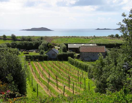 St Martin's Vineyard