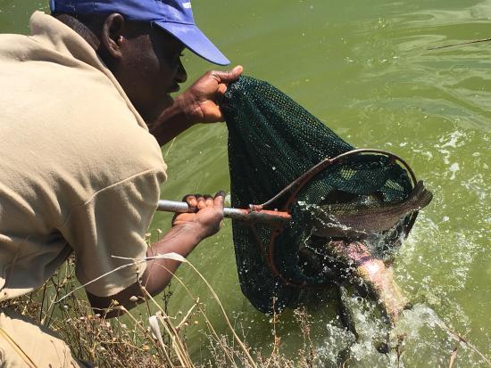 Lanseria, Sudáfrica: Stocked trout dam