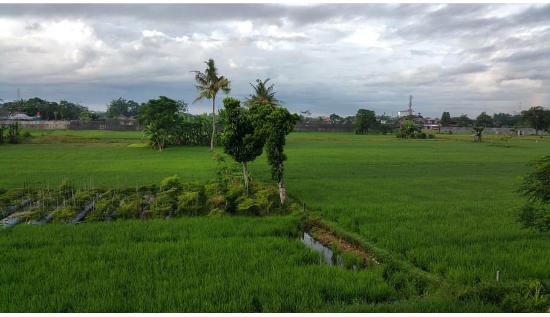 Rumah Kayen Family Homestay: View of rice field from the room