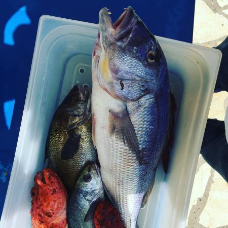 Fish April