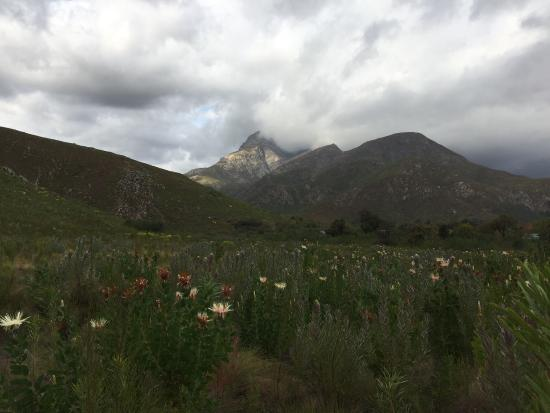 Greyton, Sudáfrica: At the end of an rainy day we walk a little walk in this very surprising nature reserve.