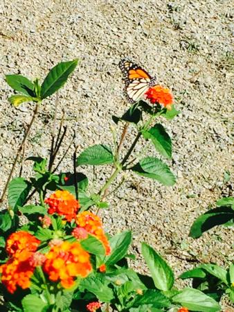 Cowboys Cantina & Outside Grill: Butterflies !!!!