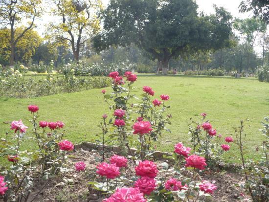 Chandigarh Rose Garden: red rosed