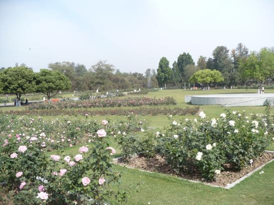 Chandigarh Rose Garden: roses roses roses everywhere