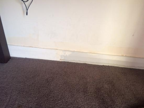 Black mold growing near the screen door - Picture of Adina ...