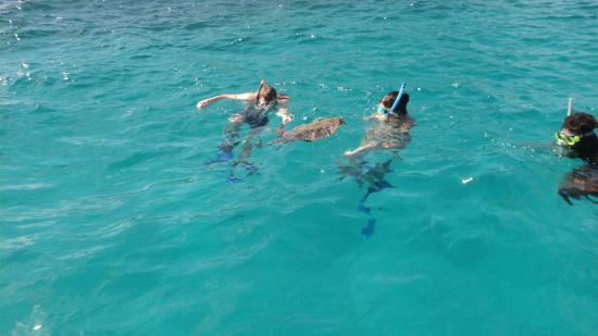 Isla Praslin, Seychelles: Crew and Guest enjoying the sea with the Sea Turtle