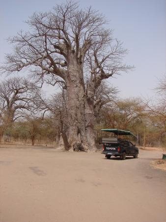 La Petite Cote, Senegal: Vue dans le parc, véhicule type pour la découverte de la réserve