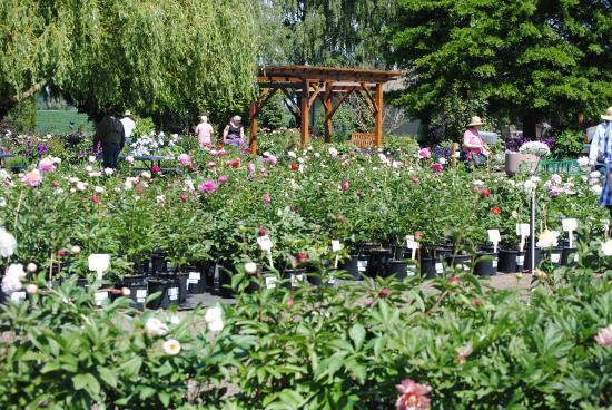 Adelman Peony Gardens Photo